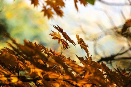 ruduo,lapai,rudens lapai,šviesa,mediena,lapai,meilė,raudonas klevo lapas,lapai,raudona