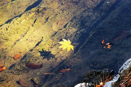 ruduo,rudens lapai,lapai,lapai,ežeras,upelis,vanduo,atspindėti,ne,lapai,gamta,sezoninis