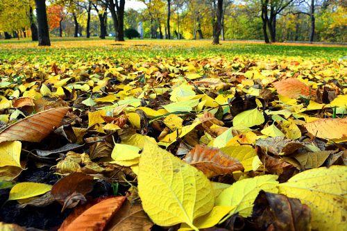 ruduo,lapai,gamta,sezonai