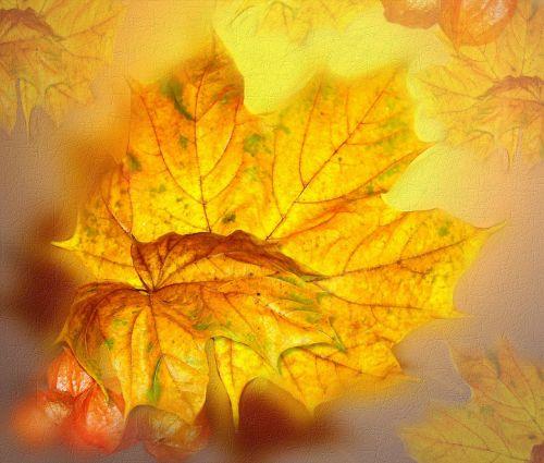 ruduo,kritimas,aukso lapai,rudens menas,aukso ruduo,koliažas