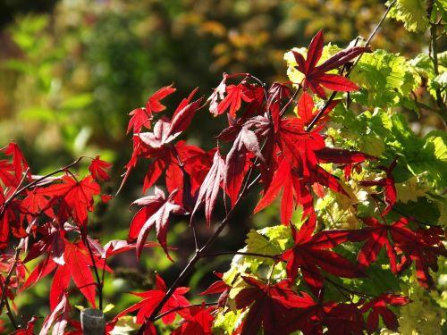 ruduo,lapai,miškas,palieka rudenį,spalvinga,aukso ruduo,kritimo spalva