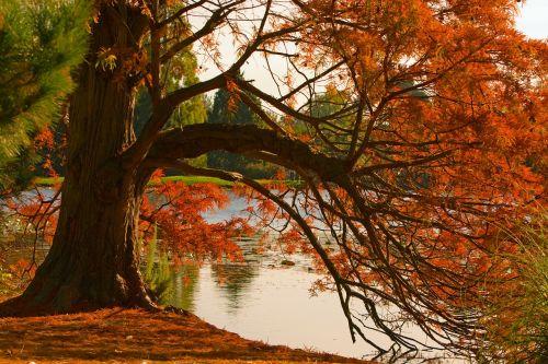 ruduo,rudens lapai,lapai,spalvinga,rudens nuotaika,medis,vanduo,kritimas,raudona,kritimo lapai,raudoni lapai