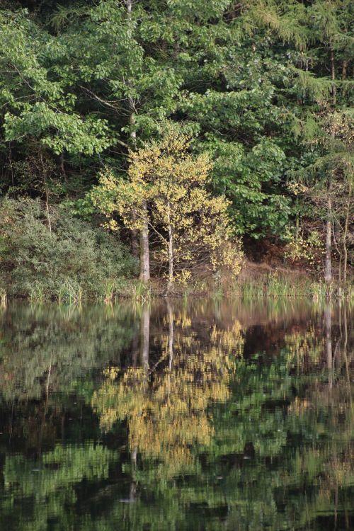 Ruduo, Veidrodinis Vaizdas, Ežeras, Vanduo, Dangus, Natūralus, Denmark, Vandens Kraštas, Miškas, Medžiai, Tyla, Ro