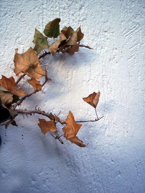 ruduo,lapai,medis,lapai,sausa šaka,sausas lapas,lapija,rudens miškai,filialas,serga,flora,žiemos lapai,rudas lapas,džiovinti lapai,petiole