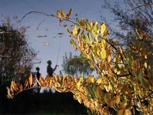 ruduo,kraštovaizdis,ežeras,Spalio mėn,sezonas,medis,gamta,lapai,siluetas,atspindys