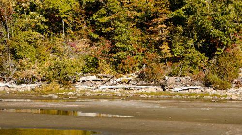 kritimas, ruduo, lapija, lapai, spalva, ežeras, kaimas, ruduo prie ežero
