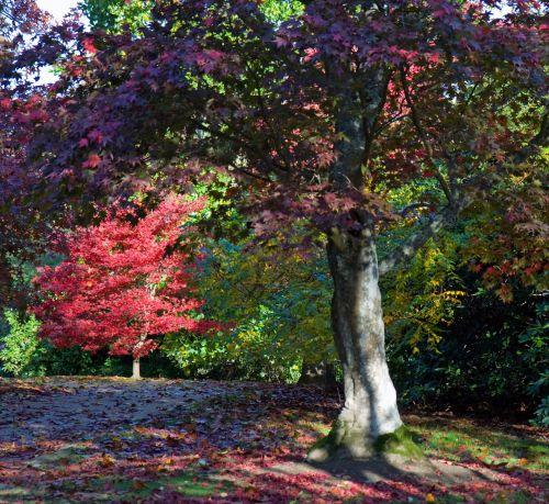 ruduo, spalvos, medis, gražus, kritimas, raudona, žalias, geltona, lapai, lapai, lapija, rudens & nbsp, spalvos, spalvos, spalvinga, mediena, gamta, rudens spalvos