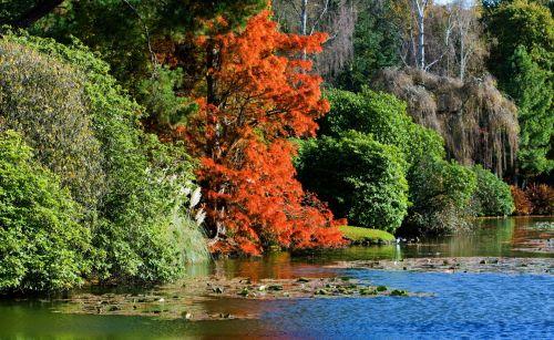 ruduo, spalvos, medis, ežeras, vanduo, medžiai, oranžinė, raudona, mėlynas, žalias, lapija, lapai, lapai, spalvinga, gyvas, rudens & nbsp, spalvos, kritimas, spalvos, gražus, gamta, rudens spalvos