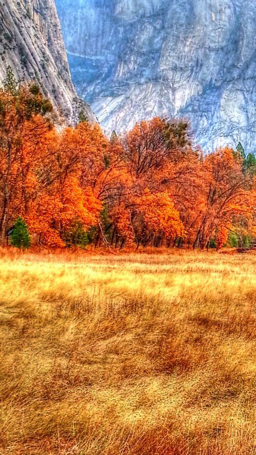 josemitas, kritimas, ruduo, laukas, nacionalinis & nbsp, parkas, ruduo josezemyje