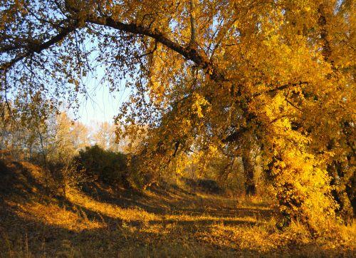 ruduo, kraštovaizdis, miškas, medžiai, lapai, augalai, rudens kraštovaizdis