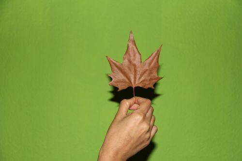 rudens lapas,ranka,geltonas lapas,ruduo,pirštas,rankos