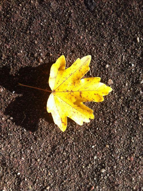 rudens lapas,geltona,simetriškas,šviesus,geltonas lapas,žemė,out