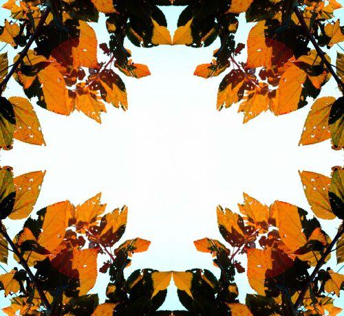 kvadratas, įrėminti, figūra, deimantas, rudens lapo rėmas