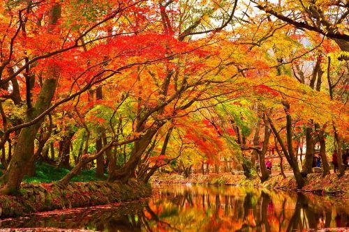 rudens lapai,mediena,ruduo,lapai,lapai,raudonas klevo lapas,lapai,klevo mediena,klevas,geltonas klevo lapas,upelis,centro,vanduo,upė,banga,upė,srautai,ripple,gamta