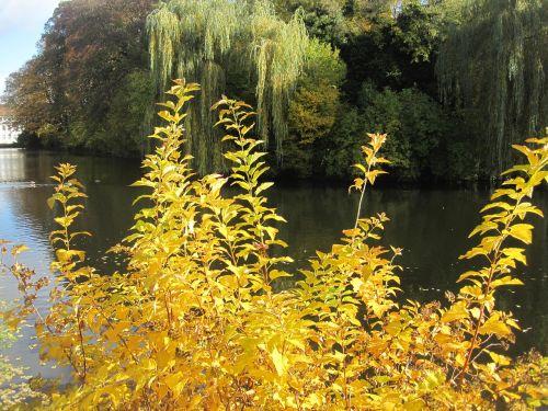 rudens nuotaika,rudens idilija,tvenkinyje,kritimo spalva,tvenkinys,gamta,ruduo,ežeras,lapai,auksinis spalio mėn .,Spalio mėn,upė,aukso ruduo,atsiras,kritimo lapija,palieka rudenį,idiliškas,atmosfera,verkianti gluosniai,medžiai,lapuočių medžiai,vanduo,metų laikas,veidrodis,antis,aukso žalumynai,aukso geltona,vandenys,kraštovaizdis,botanika,botanikos,flora
