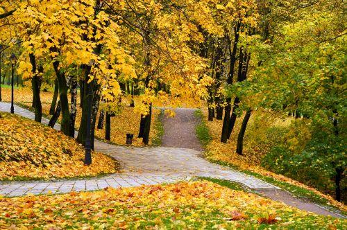 rudens parkas,ruduo,vaikščioti,parkas,lapai,listopad,geltonieji lapai,aukso ruduo,gamta,rudens lapas,geltona,miškas,geltonos rudens lapai,rudens lapai,rudens miškas,kelias,Spalio mėn