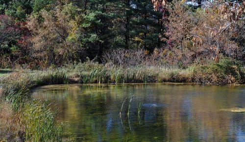 tvenkinys, vanduo, ežeras, augalai, atspindėti, atspindys, kritimas, ruduo, lapija, rudens tvenkinys