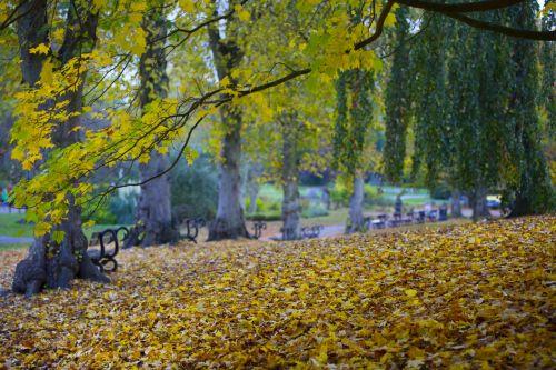 ruduo, lapai, lapai, sezonai, gamta, natūralus, filialas, medis, miškas, rudens sezonai
