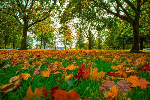ruduo, sezonai, lapai, lapai, parkas, žolė, medis, medžiai, spalvos, spalva, raudona, rožinis, šaltas, kraštovaizdis, rudens sezonai