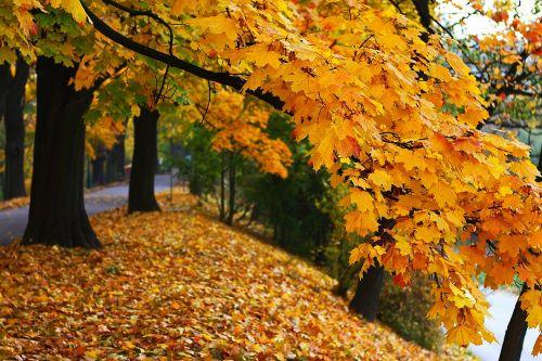ruduo, kritimas, sezonas, spalvos, gamta, kraštovaizdis, ruduo šypsosi