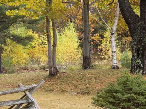 ruduo, kritimas, rudens & nbsp, medžiai, medžiai, gamta, lauke, miškas, miškai, medinis nendrės tvora, geležinkelio tvora, tvoros, akadija, maine, nauja & nbsp, Anglija, fonas, fonas, rudens medžiai