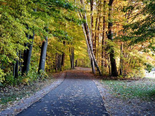 kelias, vaikščioti, vaikščioti, kritimas, ruduo, lapija, medžiai, kaimas, lauke, tapybos, sezonas, sezoninis, rudens pėsčiųjų takas