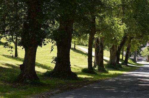 alėja,medžiai - seni medžiai,ąžuolo,toli,gamta,medžiai,kraštovaizdis,žygiai,miškas,žalias