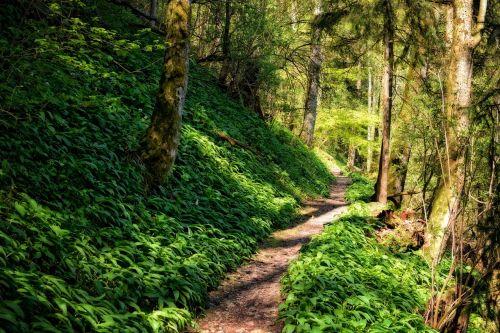 toli,kelias,miškas,žygiai,gamta,takas,miško takas,žalias,pėsčiųjų takas,migracijos kelias,atsigavimas,šventė,laisvalaikis,susigrąžinti,atsipalaidavimas,atsipalaiduoti