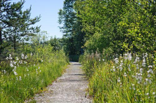 toli,gamta,žalias,takas,miško takas,gamtos takas,Promenada,atsigavimas,žalia,migracijos kelias,kraštovaizdžio kelias,gamtos apsauga,atsipalaiduoti