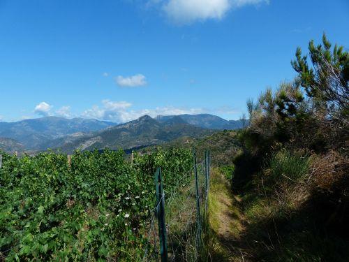 toli,takas,ligurija,Ligurijos kalnų takas,alta via dei monti pasveikino,avml,kalnų ligurijos takas,ilgo nuotolio takas,keliautojas,Höhenweg,monte saccarello