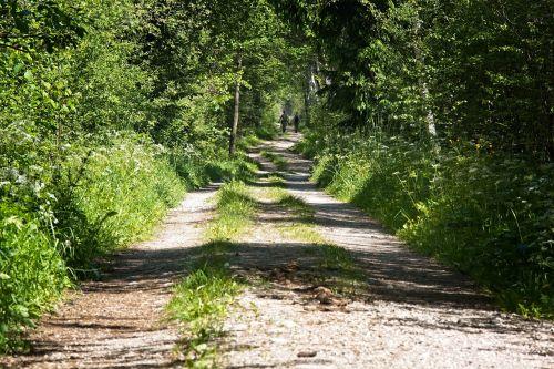 toli,miško takas,gamta,takas,žygiai,laisvalaikis,žalias,nuotaika,šventė,idilija,atsigavimas,gamtos takas,Promenada,juostos,idiliškas,miško kelias,medžiai,miškas