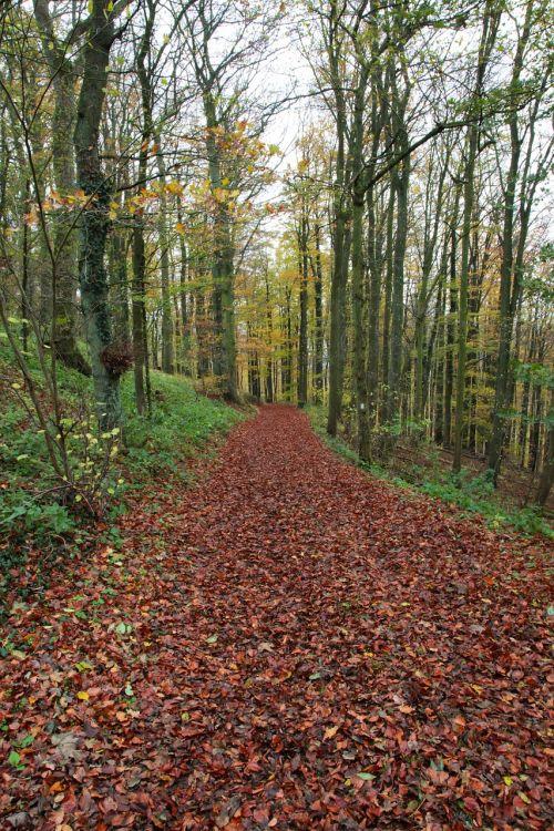 toli,miško takas,miškas,medžiai,gamta,takas,žygiai,kraštovaizdis,nuotaika,žalias,kelias,gamtos takas,atsigavimas,juostos,Promenada,atsipalaiduoti,romantika,idiliškas,lapai,ruduo,idilija,įspūdis,atmosfera