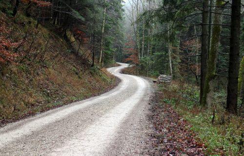 toli,miškas,gamta,miško takas,medžiai,takas,gamtos takas,ruduo,nuotaika