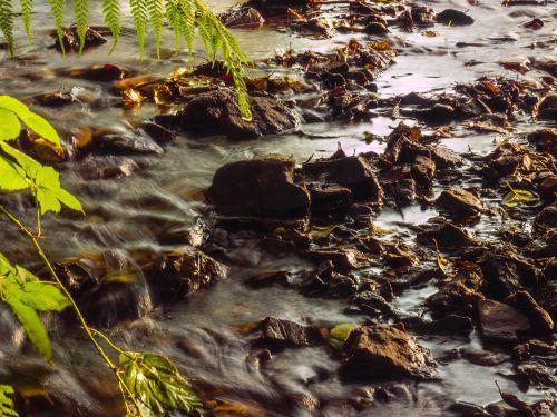 Bachas,gamta,vanduo veikia,vanduo,upelis,natūralus vanduo,miškas,saulė,idilija,saulės šviesa