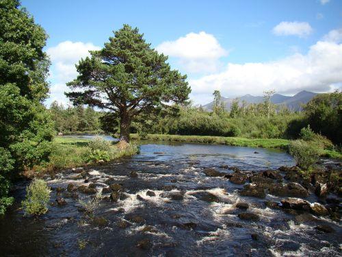 Bachas,upė,žuvis,žvejybos vandenys,lašiša,turtingas deguonis,sveikas,vanduo,gamta,kraštovaizdis,srautas,idiliškas,aišku,akmenys,vandenys,Airija,kerry,Caragh,Glencar