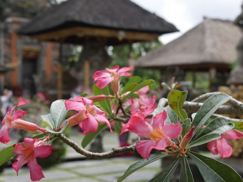 Bali, Asija, Indonezija