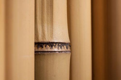 bambukas,milžinas bambukas,bambuko siena,gelsvas,augalas,flora,fondas,fonas