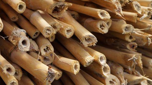 bambukas,bambuko sodas,augalas,medis,mediena,stiebas,vamzdis,sodas