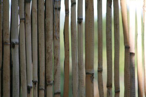 bambukas,geltonas bambukas,Halme,tvora,bambuko šiltnamio