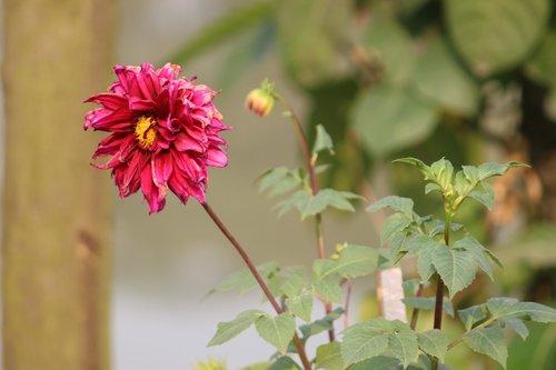 Bangladešo pobūdį, Indijos gamta, pobūdį, gamtos grožis