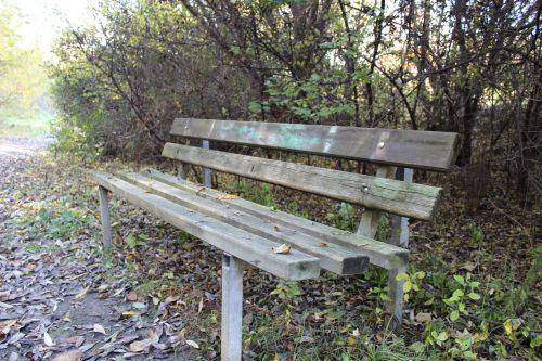 bankas,ruduo,miškas,lapai,medžiai,gamta,sezonai,stendas,vienatvė,poilsio vieta,poilsis,palikti