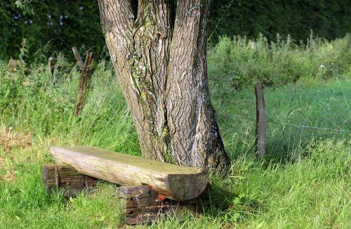 bankas,medinis stendas,stendas,sėdynė,gamta,medis,tvora,pieva,spustelėkite,senas,ištemptas,atsigavimas,poilsis,tylus