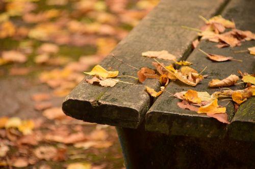 bankas,medinis stendas,stendas,gamta,poilsis,spustelėkite,miškas,sėdynė,out,mediena,senas medinis stendas,taika,senas,ištemptas,parko suoliukas,lapai,poilsio vieta,ruduo,kritimo lapija,galas,gyvenimo pabaiga,palikti