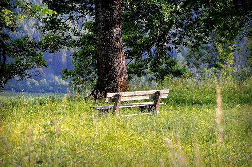bankas,stendas,sėdynė,poilsis,gamta,tylus,medis,medinis stendas,Allgäu,žygis,pieva,laukinės vasaros spalvos