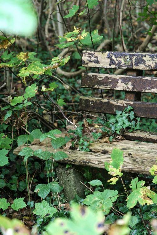 bankas, ivy miškas, senas, rots, gamta, lapai, alpinistas, nuotaika, pratraukti augalų, laikas, išplauta, pamiršk