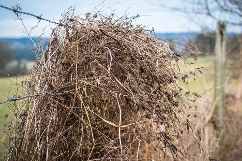 spygliuota viela,šiaudai,žolė,tvora,sausas,priklausyti,Karg,nevaisinga