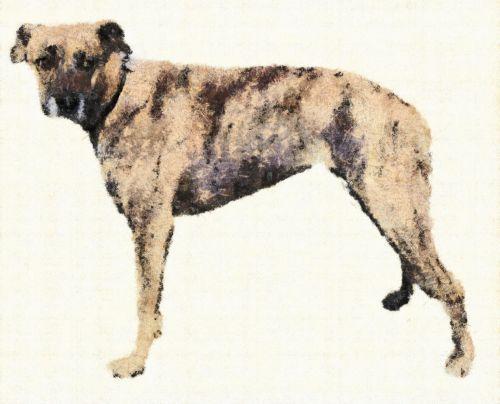 šuo, skausmas, gyvūnas, kreida, bardino, naminis gyvūnėlis, draugas, paklusnumas, stovintis, dažymas, piešimas, bardino šuo