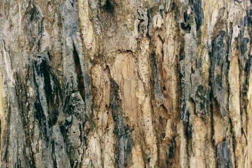 žievė,mediena,mediena,parched,tekstūros,sausas,mediena,gamta,fonas,tapetai