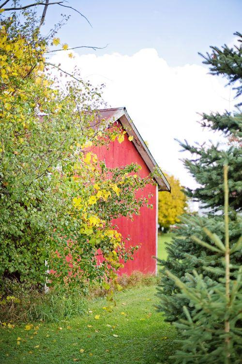 tvartas,raudona,mediena,raudonasis svirnas,kaimiškas