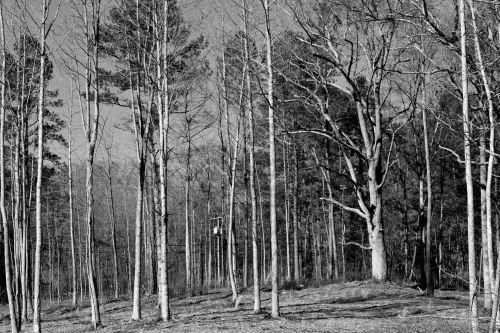 miškas, juoda & nbsp, balta, ne & nbsp, žmonės, medis, diena, fotografija, grožis & nbsp, gamta, miškų naikinimas, aplinka, aplinkosaugos & nbsp, išsaugojimas, ekstremalus & nbsp, reljefas, horizontalus, kraštovaizdis, lapai, vienspalvis, gamta, lauke, augalas, Nuotolinis, sezonas, simetrija, medis & nbsp, ca, barono miško medžiai